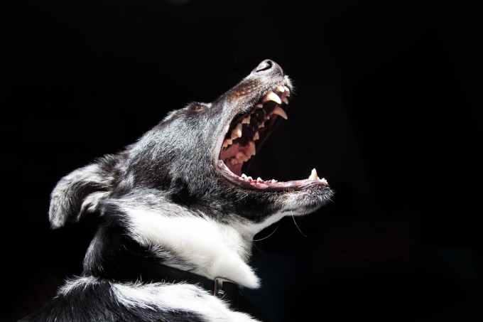 animal dog pet dangerous